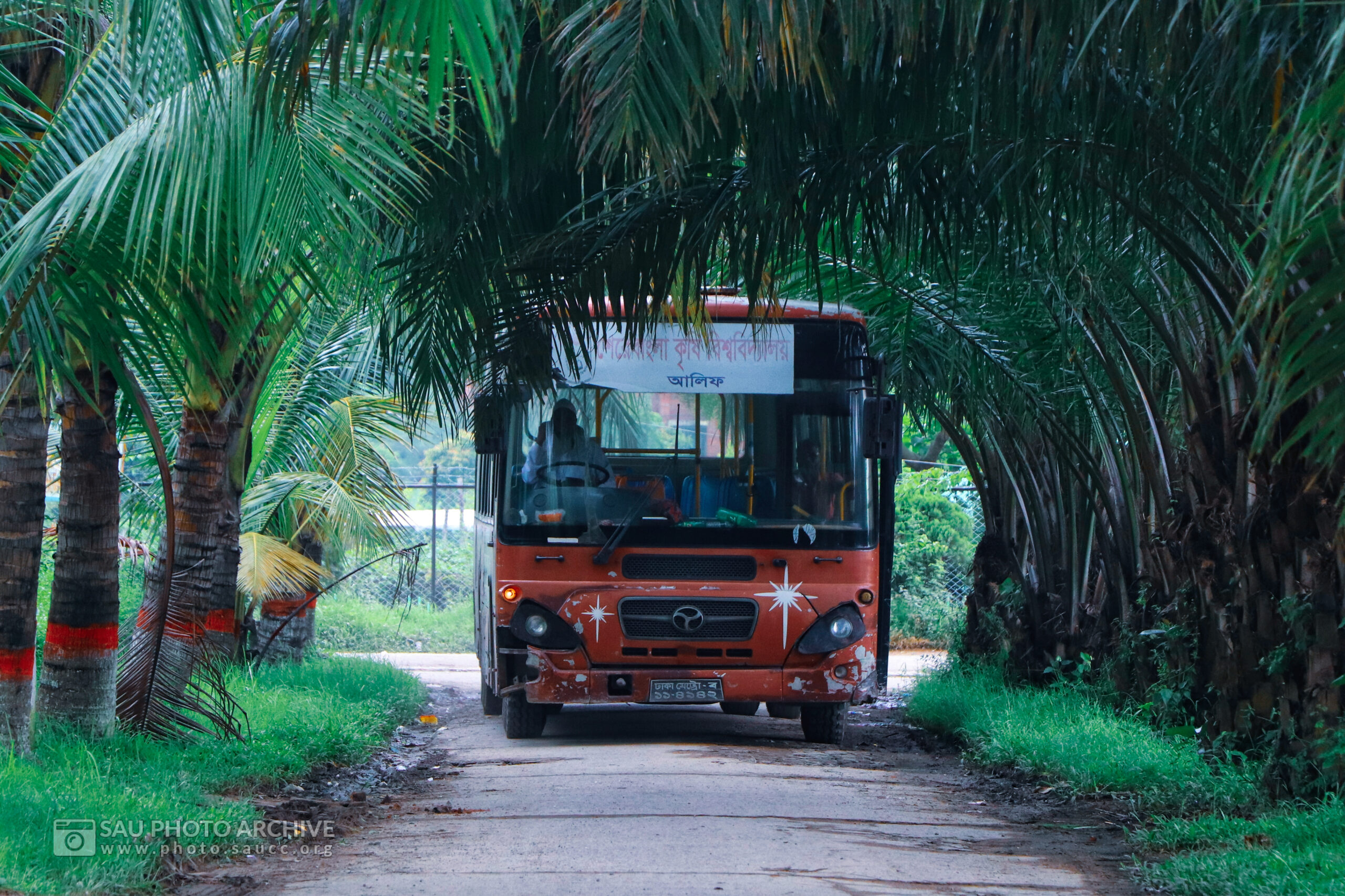 A Road photo is captured by Md. Nazmus Sakib Anik at Sher-e-Bangla Agricultural University titled Red Bus (Alif) on the way of Old Agribusiness Management Faculty